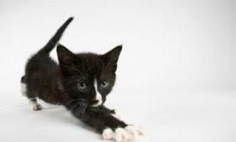Когтеточка для кішок своїми руками