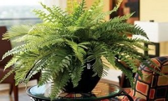 Кімнатні рослини для дому