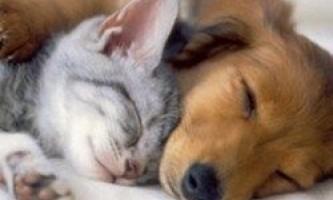 Кошатнік проти собакаря: хто розумніший, а хто більш комунікабельними?