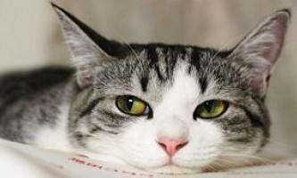 Кішка в будинку