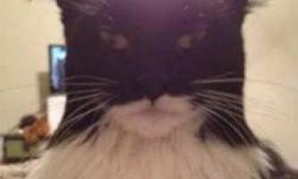 Кішки-двійники відомих людей, персонажів і речей