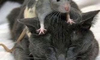 Вкрай небезпечні тварини з найбільш невинною і милою зовнішністю