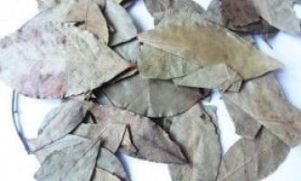 Лавровий лист від прищів