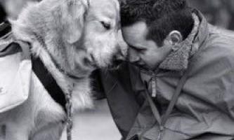 Люди більше співчувають собакам, ніж іншим людям