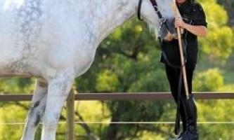Коні дізнаються господарів по голосу