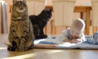 Кращі породи кішок для сім`ї з дітьми