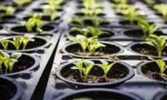 Місячний календар для рослин і розсади на лютий 2017