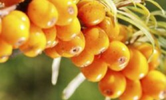 Місячний календар для рослин на серпень 2015