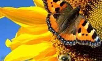 Місячний календар для рослин на серпень 2016