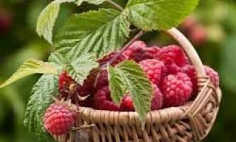 Місячний календар для рослин на липень 2016