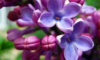Місячний календар для рослин на травень 2014