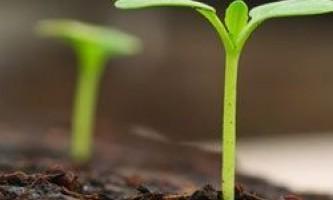 Місячний календар для рослин на березень 2015