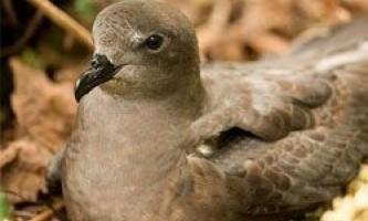 Морські птахи загрожує небезпека