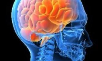 Мозок регулює рівень цукру в крові