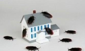 Чи можна без зусиль впоратися з домашніми комахами?