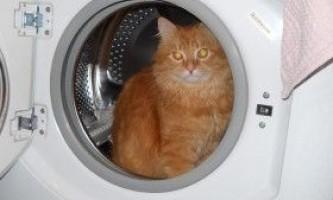 Мстять чи кішки за покарання?