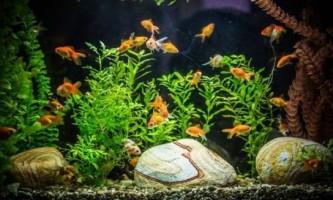 Каламутна вода в акваріумі: причини, що робити?