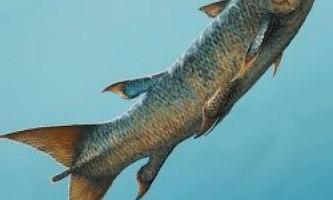 Знайдено нові скам`янілості риб-убивць минулого