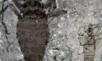 Знайдені скам`янілості найдавнішої блохи