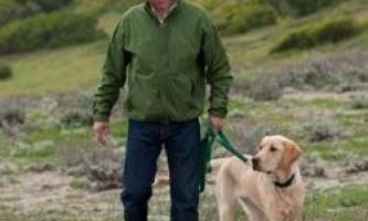 Не потрібно звертатися до особистому тренеру - краще заведіть собаку!