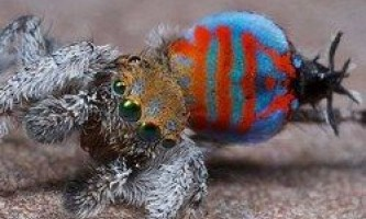 Виявлено два нових види павука