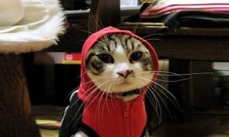 Одяг для кішок і котів своїми руками