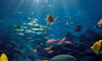 Окислення океану - кому загрожує небезпека