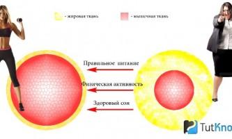 Особливості та способи прискорення метаболізму