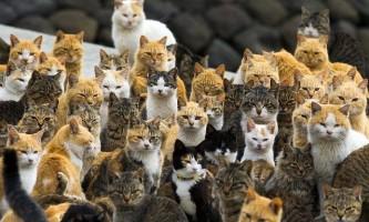 Острів кішок