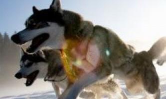 Отруєння запряжних собак сполуками ртуті