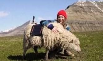 Вівці з камерами замість машин google street view