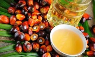 Пальмова олія: шкода і користь
