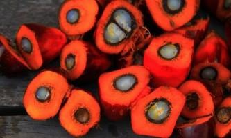 Пальмова олія: шкода чи користь