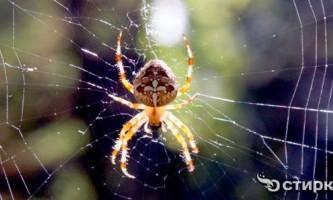 Павуки в будинку: що робити з навалою непрошених гостей?