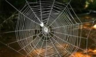 Павутина в 10 разів міцніше кевлара