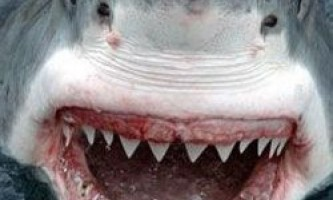 Чому акулам не треба чистити зуби?