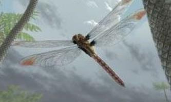 Чому зникли комахи-гіганти?