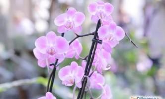 Чому орхідея не цвіте?