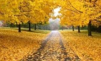 Чому восени листя змінюють забарвлення