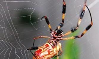 Чому павуки не прилипають до власної павутині?