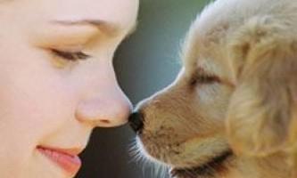 Чому собаки вміють відчувати нашу біль?