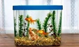 Покупка акваріума і устаткування до нього