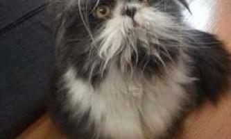 Користувачі в замішанні: це кішка або собака?