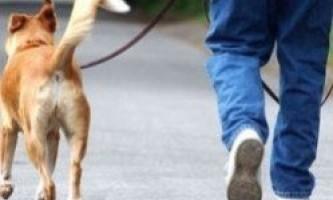 Порода собаки розповість про її власника