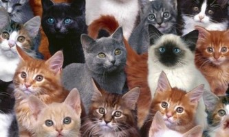 Породи кішок: картинки і назви