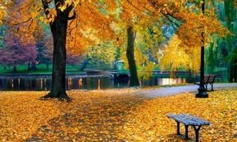 Посадка дерев восени