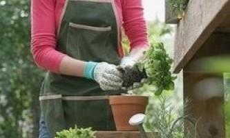 Правила пересадки кімнатних рослин