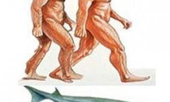 Предком людини була акула