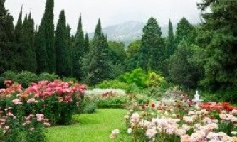 Роза - вирощування і догляд в саду
