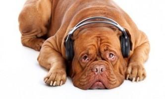Найспокійніша порода собак